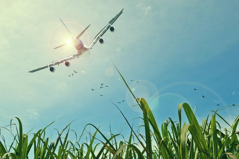 A380 Birds Grass
